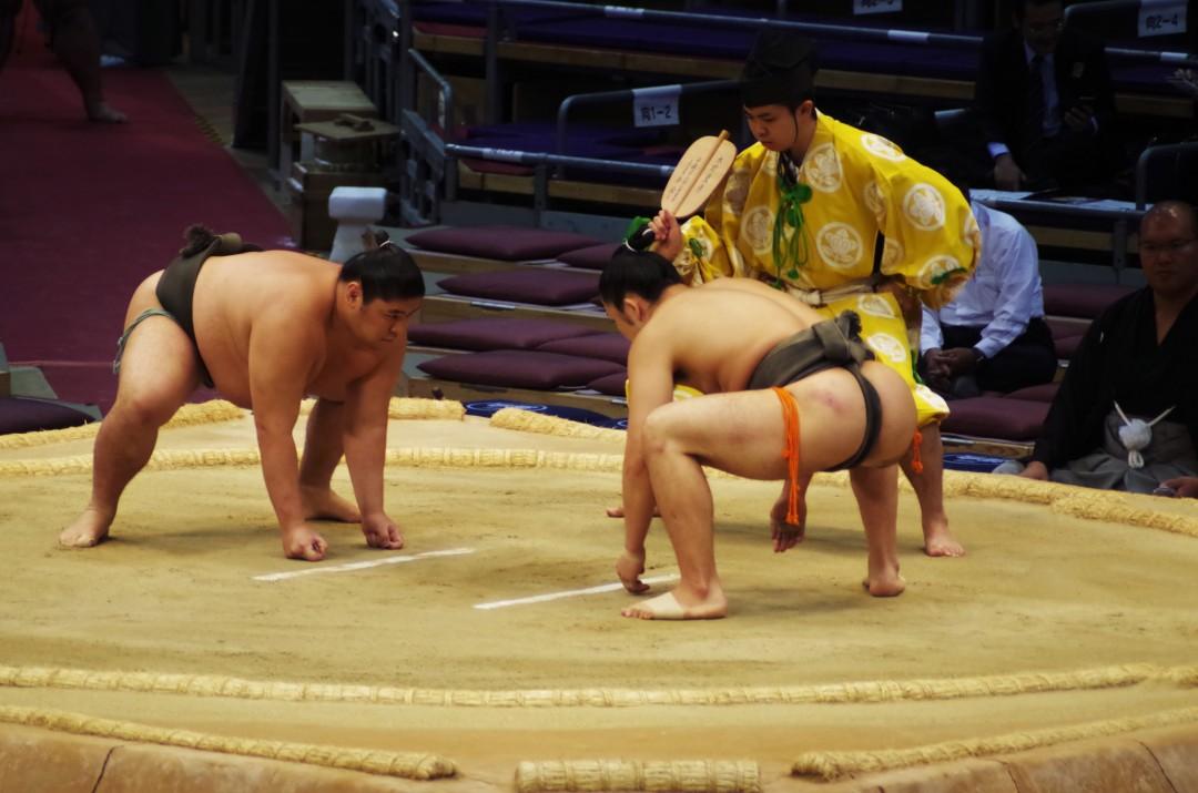 d19 - sumo