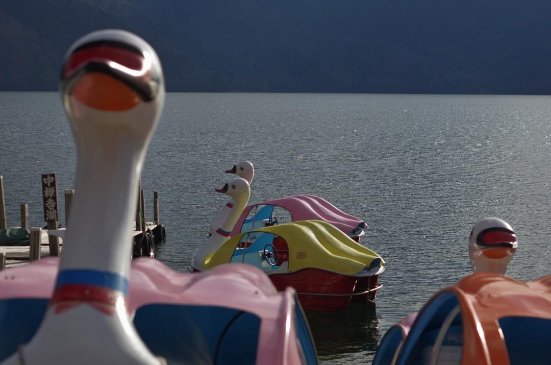 d5 - ducks