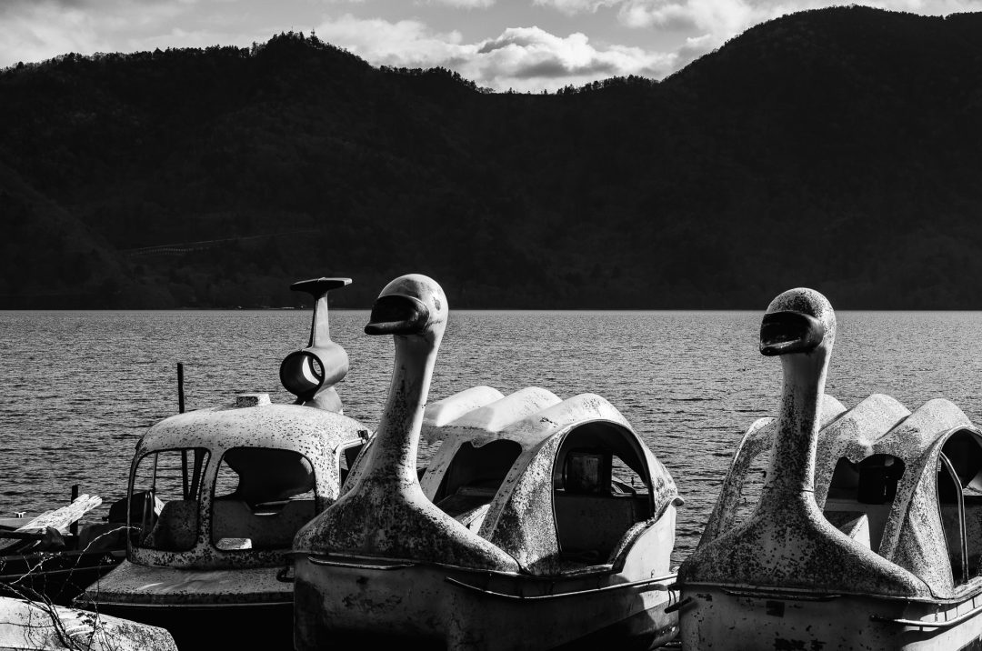 Boats or swans